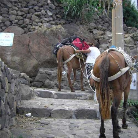 In Alicudi there are no roads but only paths. Donkeys will carry your luggage to the house